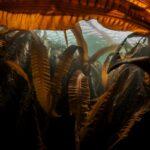 Морская капуста: польза и вред