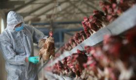 Первый случай заражения человека птичьи гриппом в РФ