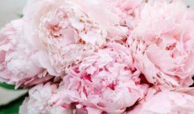 Пиономания: лучшие ароматы с главным цветком мая