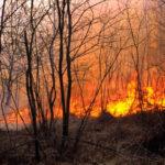 Пожары вГреции непредставляют угрозы для россиян